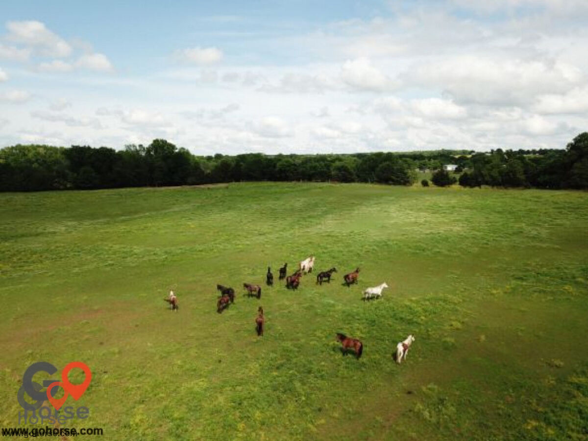 Sunshine Acres Ranch Horse stables in Romance AR 3
