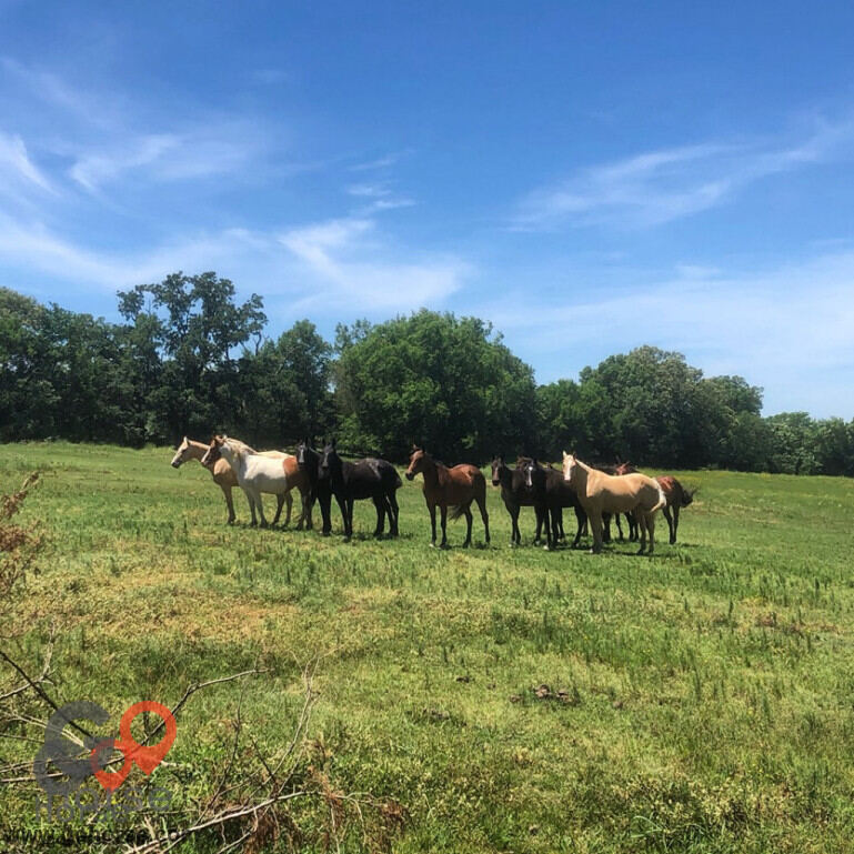 Sunshine Acres Ranch Horse stables in Romance AR 10