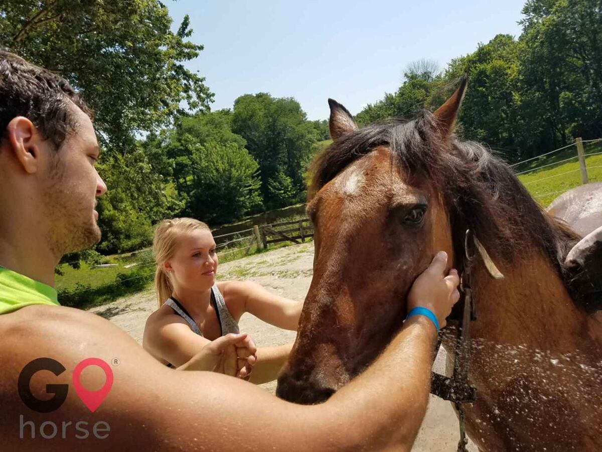 First Farm Inn Horse stables in Petersburg KY 2