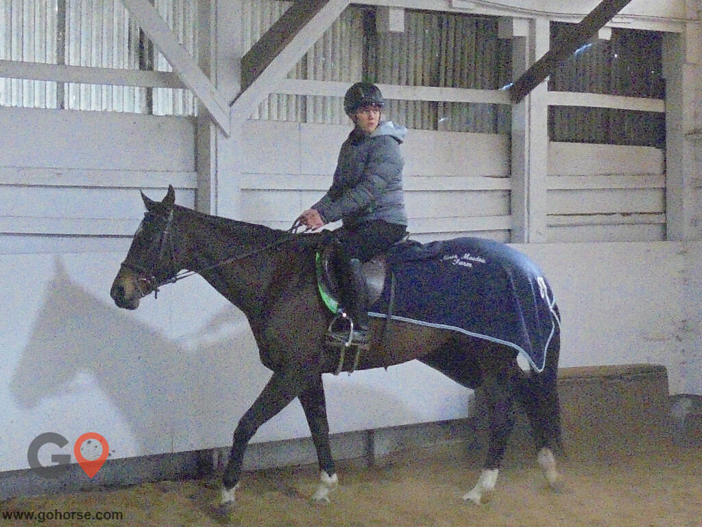 Grandview Farms Equestrian Center Horse stables in Harwinton CT 14