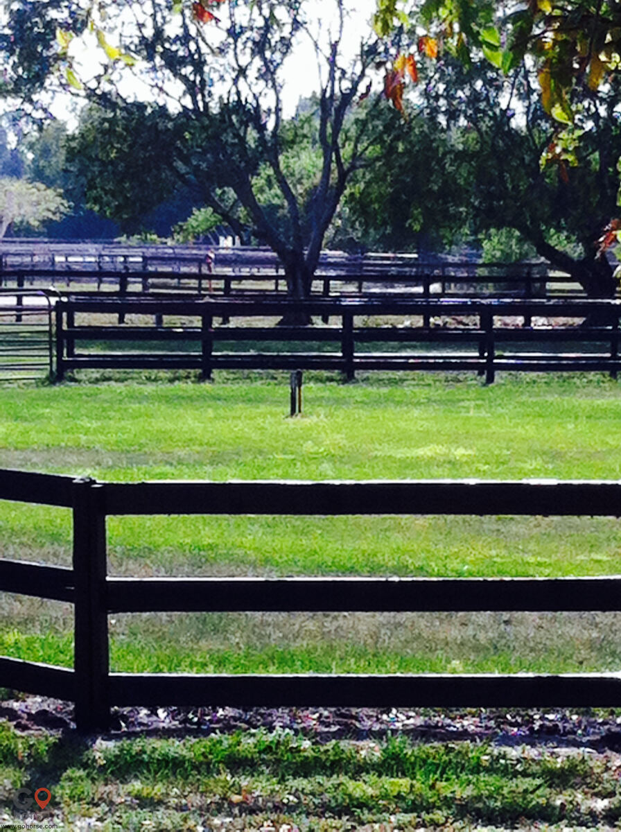 Halvorsrod Farm Horse stables in Wellington FL 5