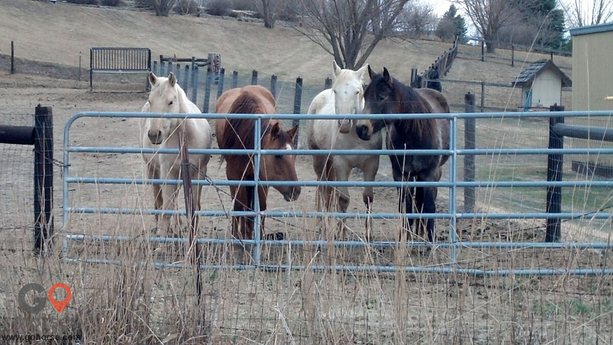 Circle C Ranch Horse stables in Council Bluffs IA 6