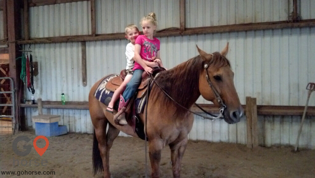 Circle C Ranch Horse stables in Council Bluffs IA 10