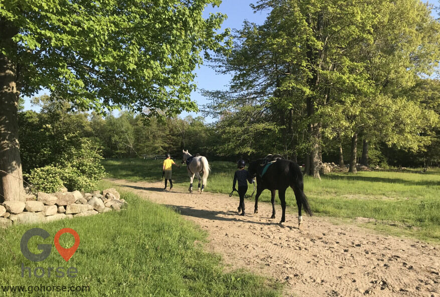 Crystal Equine Horse stables in Scituate MA 4