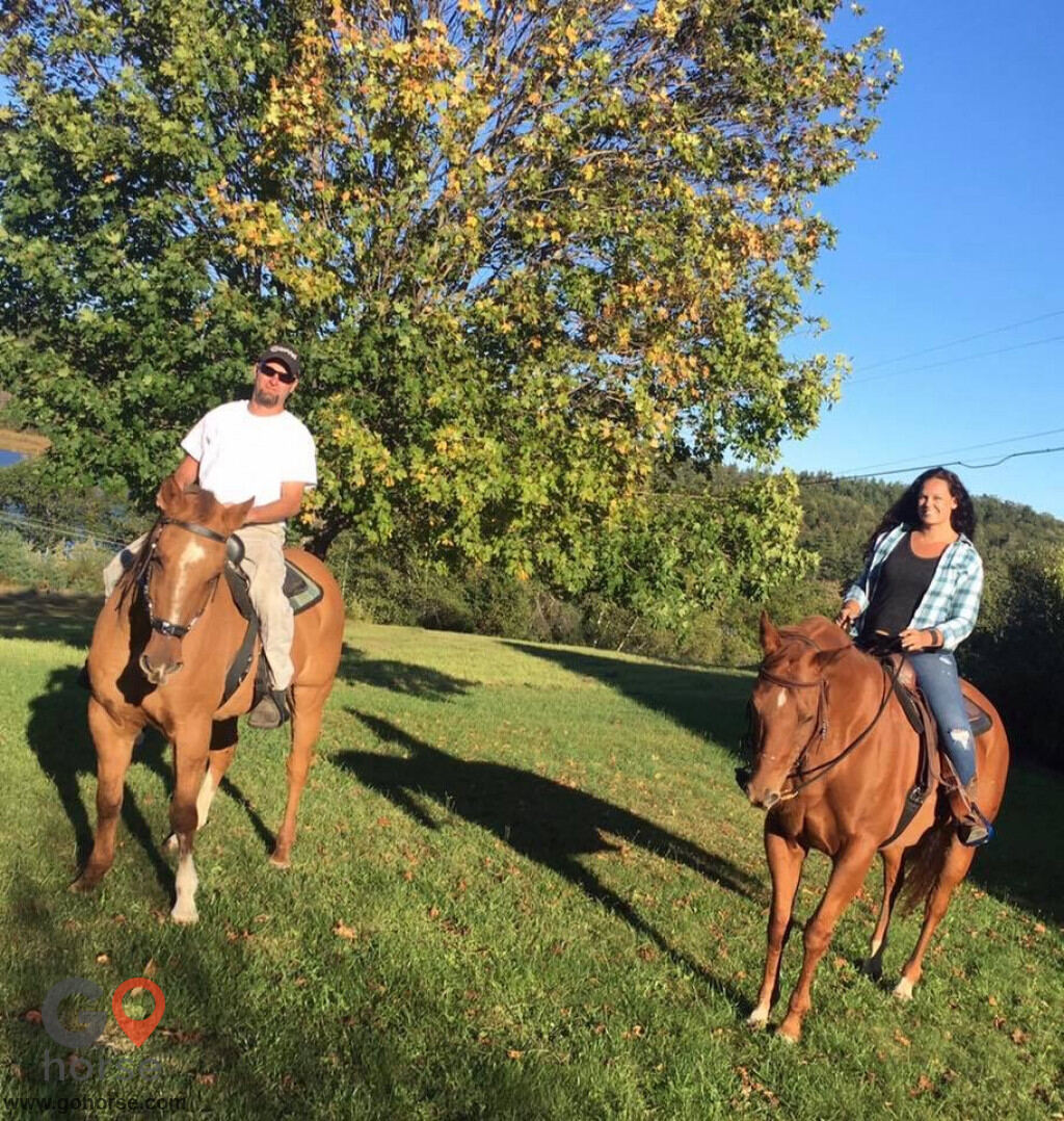 GoHorse | Hitching Post Farm | Horse Stables in Pittsfield
