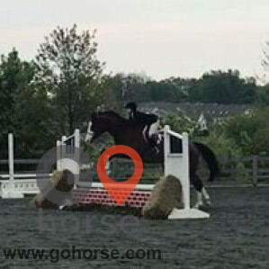 Amazing Grace Equestrian Center Horse stables in Parkton MD 6