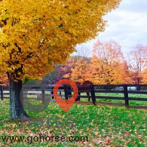Amazing Grace Equestrian Center Horse stables in Parkton MD 4