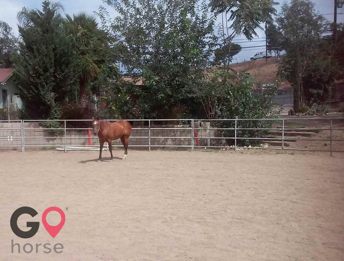 Little T Ranch Horse stables in Lakeside CA 1
