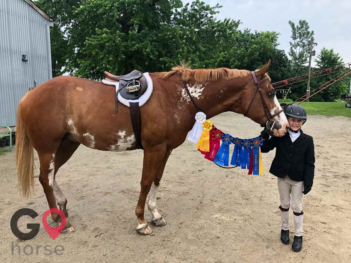 Turn Crest Stable Horse stables in Kasson MN 8