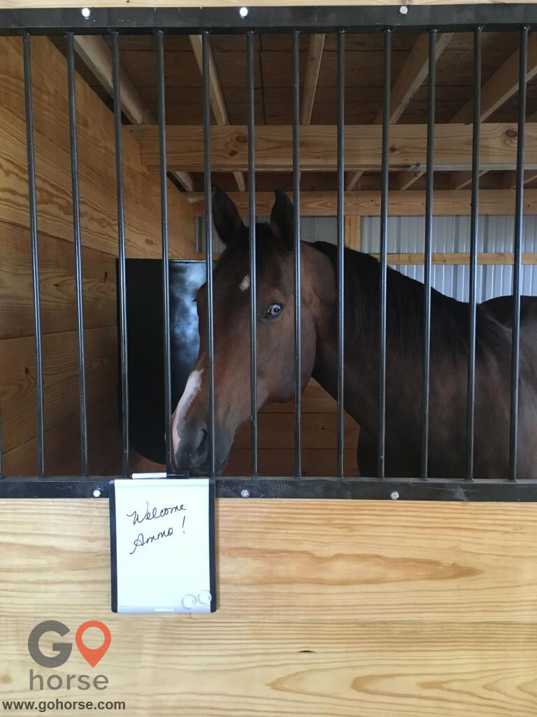 Savage Quarter Horses Horse stables in Frankton IN 4