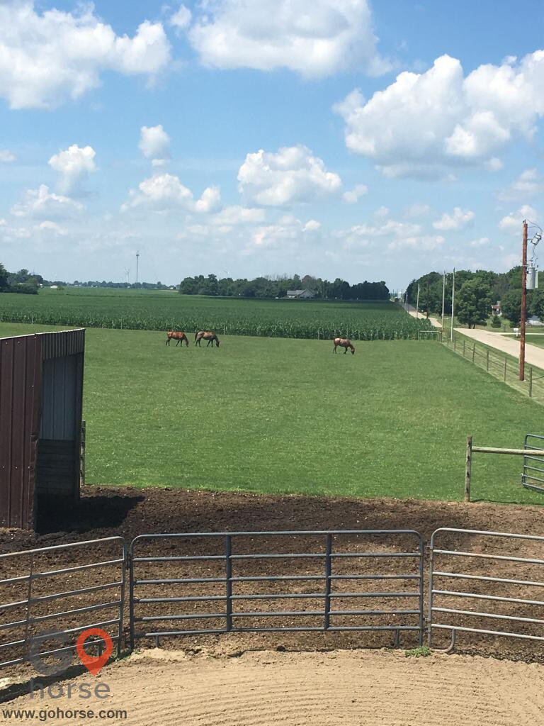 Savage Quarter Horses Horse stables in Frankton IN 3
