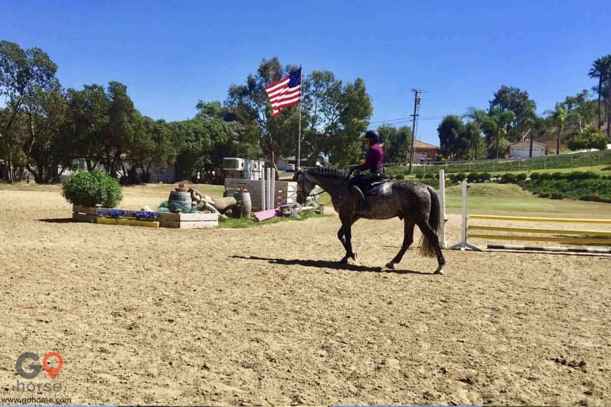 Royal Horses Stables Horse stables in San Marcos CA 4