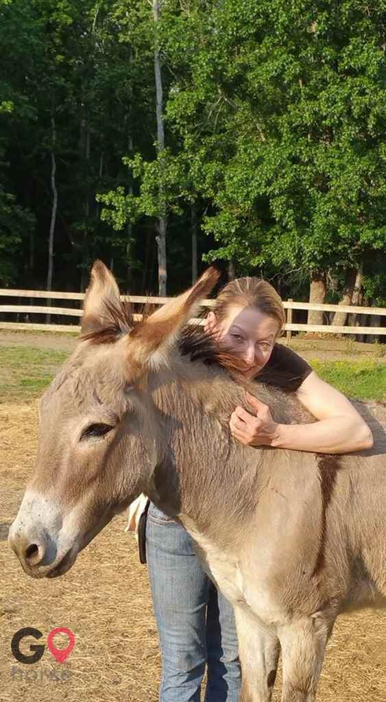 Trinity Rescue and Equine Sanctuary Horse stables in Acworth GA 2