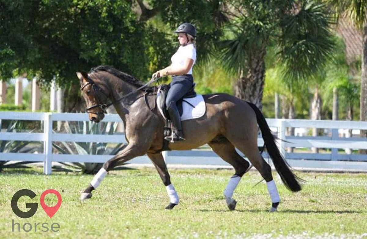 Ginger Hollow Farm Horse stables in Land O Lakes FL 1
