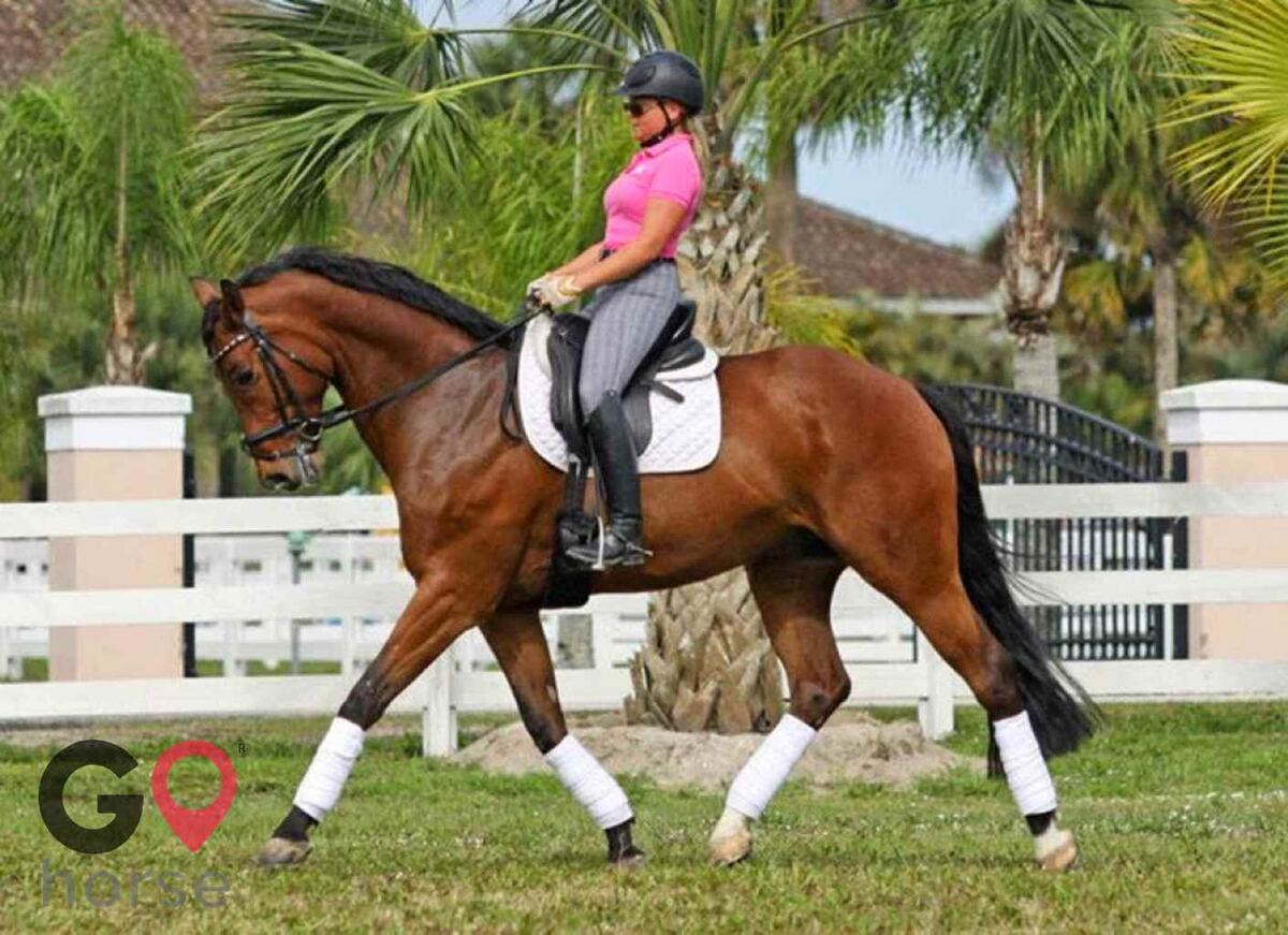 Ginger Hollow Farm Horse stables in Land O Lakes FL 6