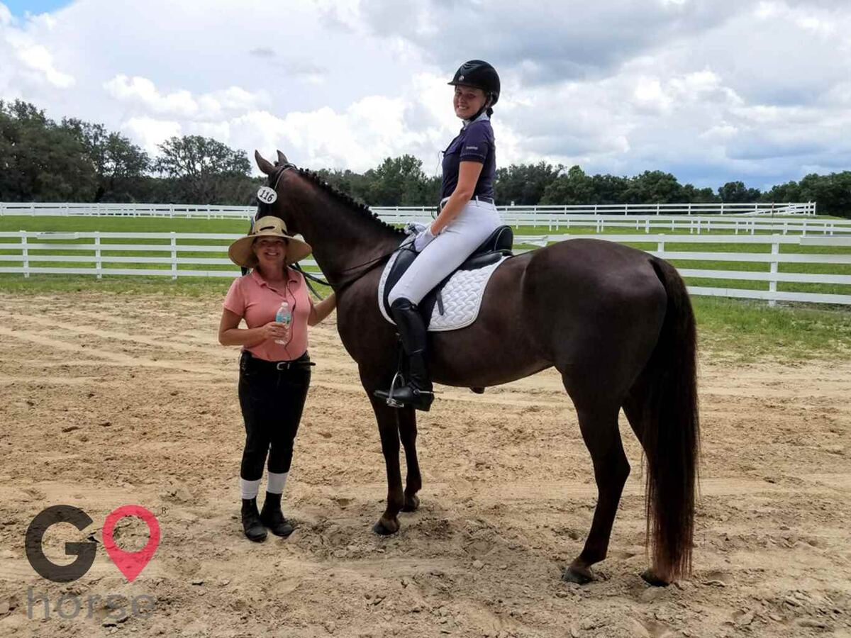 Ginger Hollow Farm Horse stables in Land O Lakes FL 10