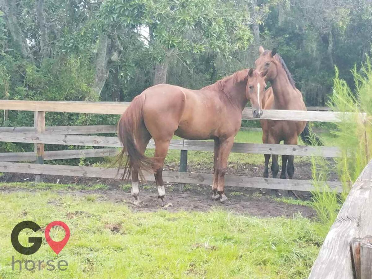 Ginger Hollow Farm Horse stables in Land O Lakes FL 8