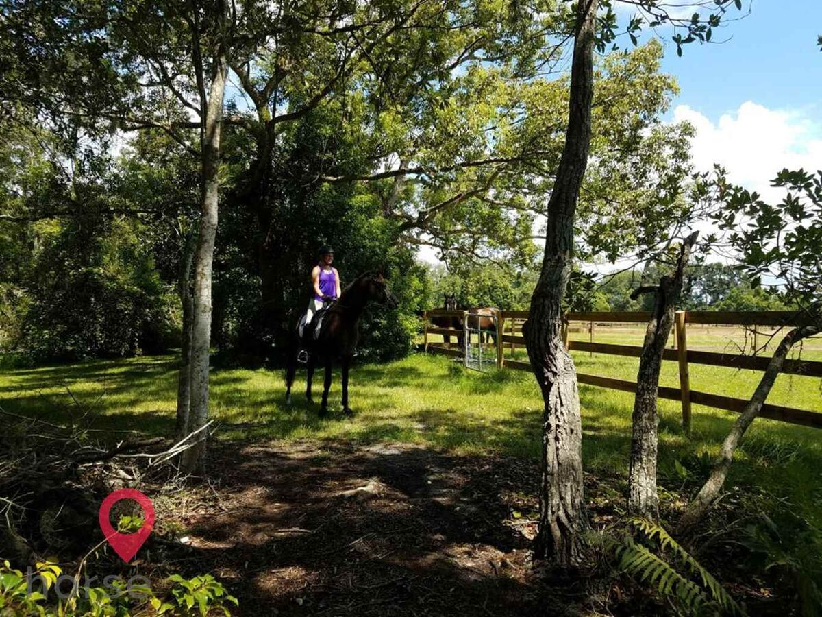 Ginger Hollow Farm Horse stables in Land O Lakes FL 7