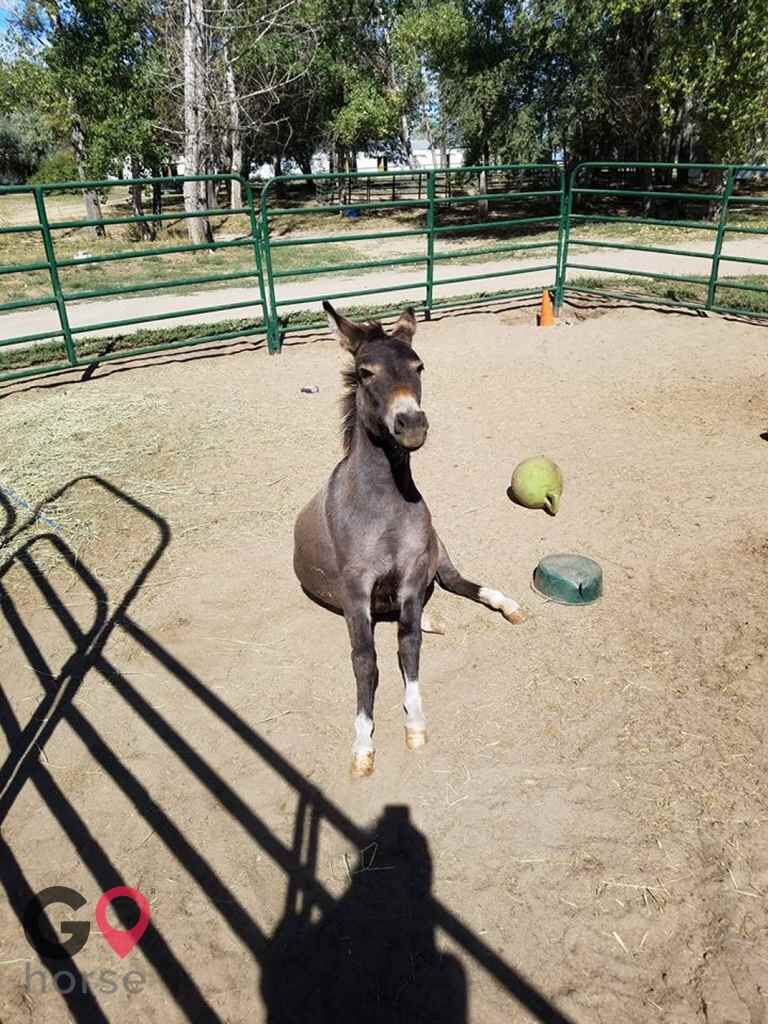 Triple C Stables Horse stables in Fort Lupton CO 9