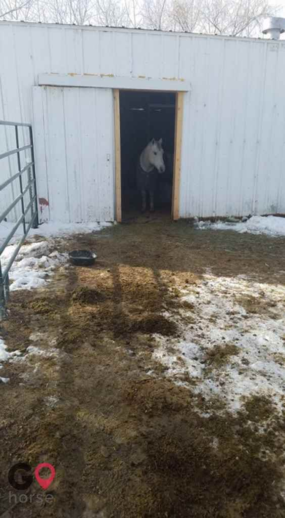 Triple C Stables Horse stables in Fort Lupton CO 8