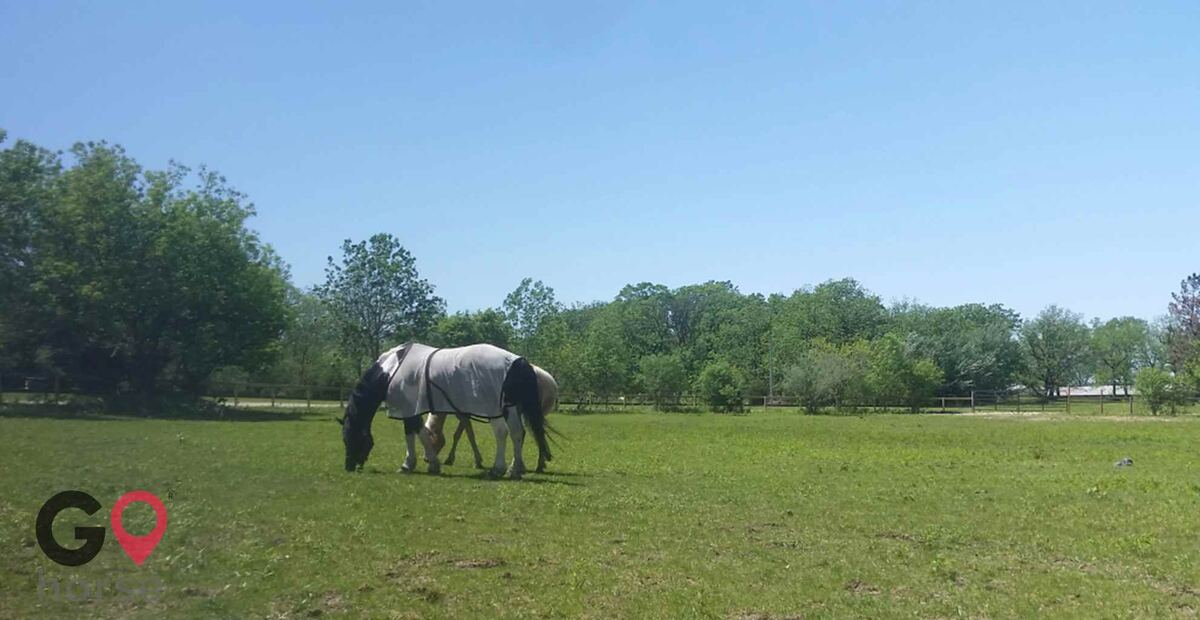Bliss Farm Horse stables in Lockport IL 1