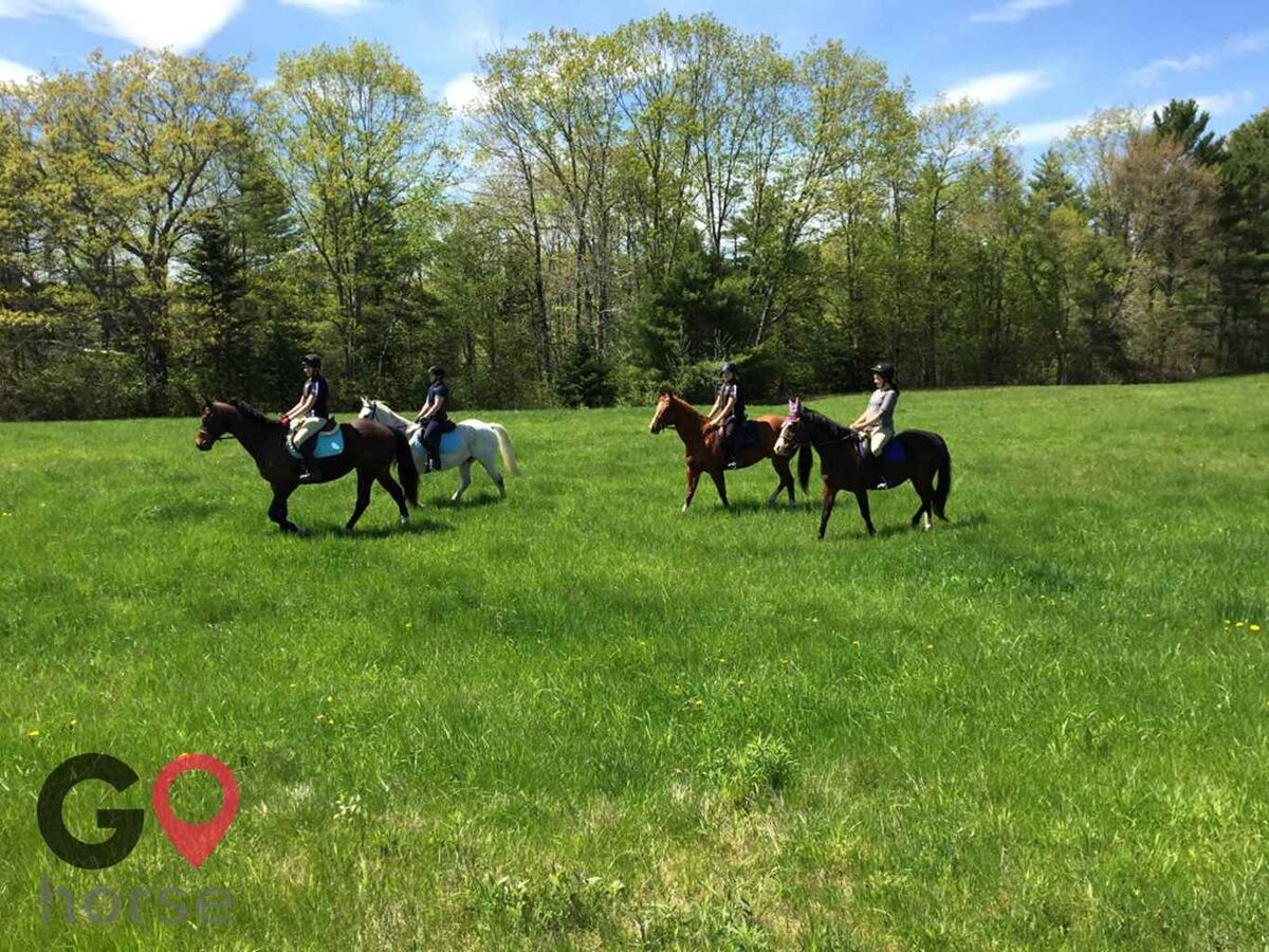 Wild Child Farm Horse stables in Pittston ME 4