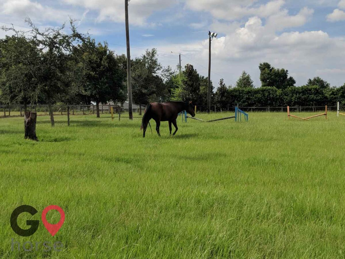 Good E Nuff Farms Horse stables in Dade City FL 1