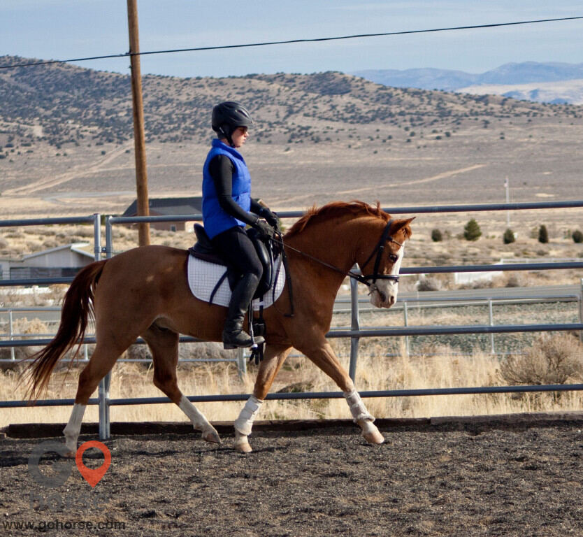 Grace Sporthorses Ranch Horse stables in Winters CA 4