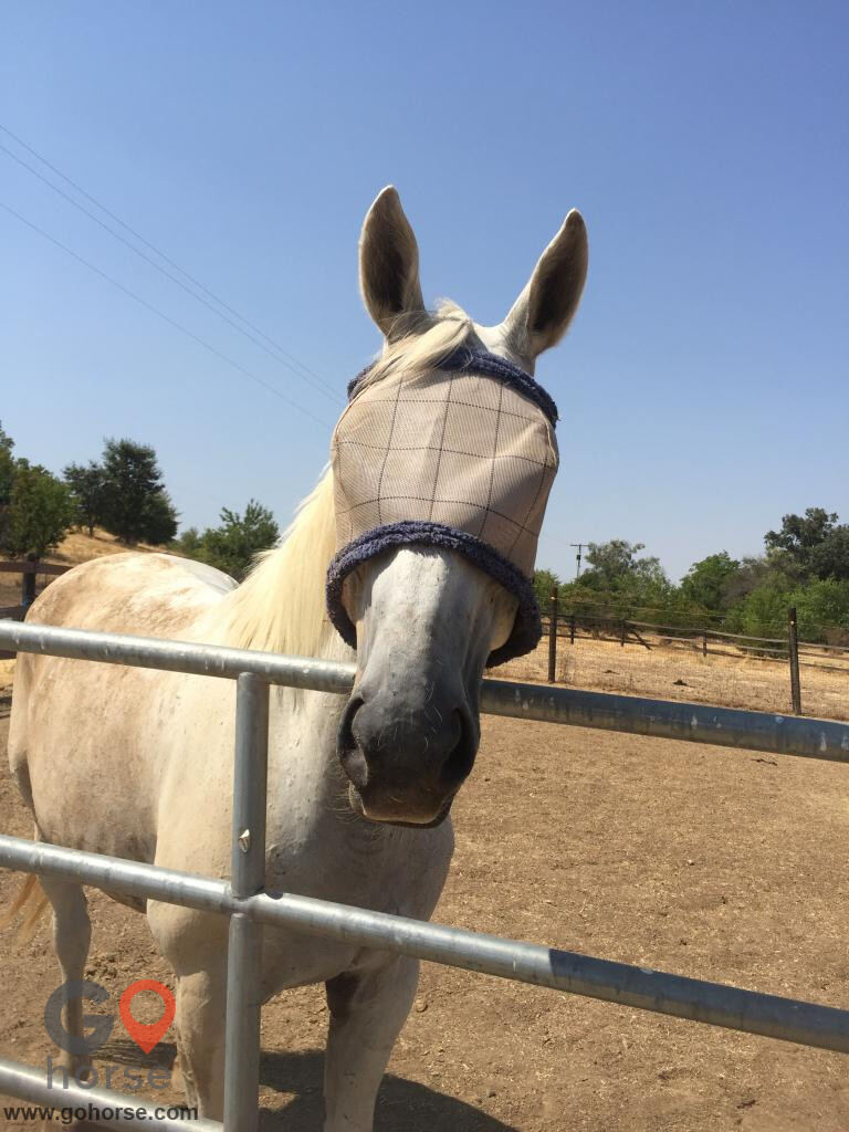 Grace Sporthorses Ranch Horse stables in Winters CA 1