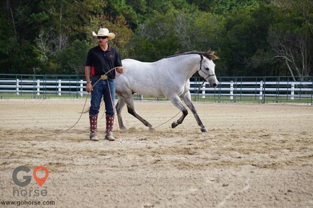 Pear Tree Ranch Horse stables in Citra FL 12