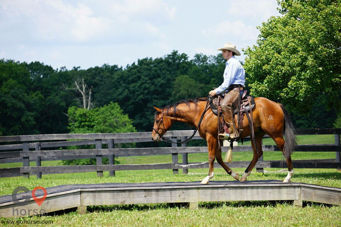 Pear Tree Ranch Horse stables in Citra FL 4
