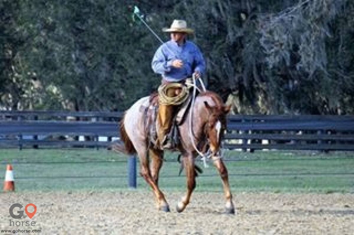 Pear Tree Ranch Horse stables in Citra FL 17