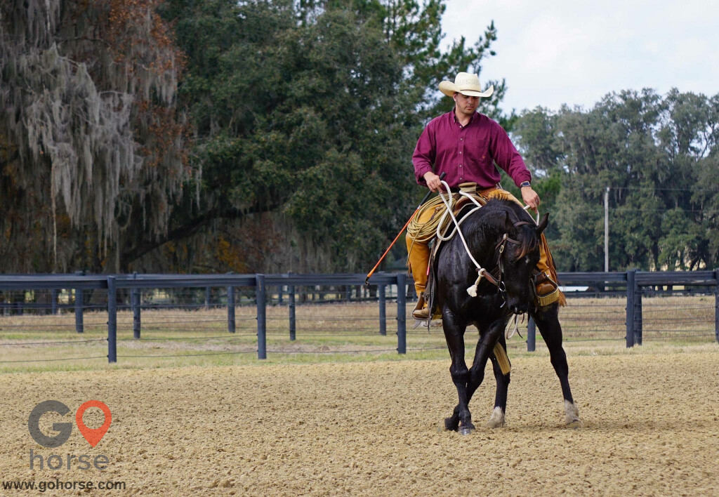 Pear Tree Ranch Horse stables in Citra FL 7