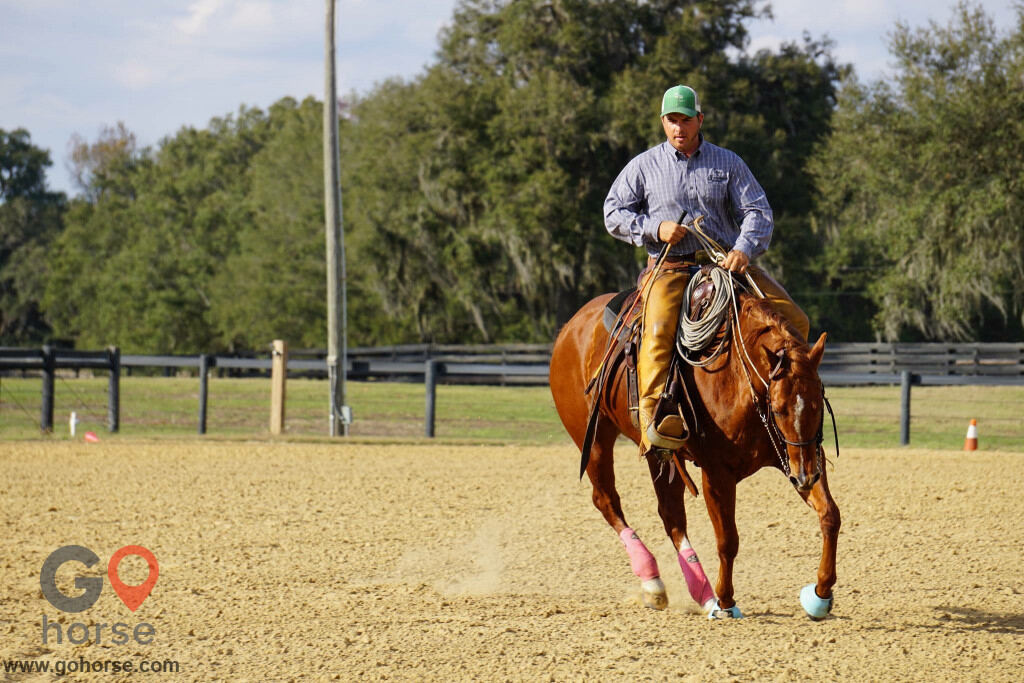 Pear Tree Ranch Horse stables in Citra FL 10