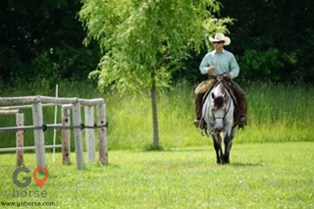 Pear Tree Ranch Horse stables in Citra FL 15