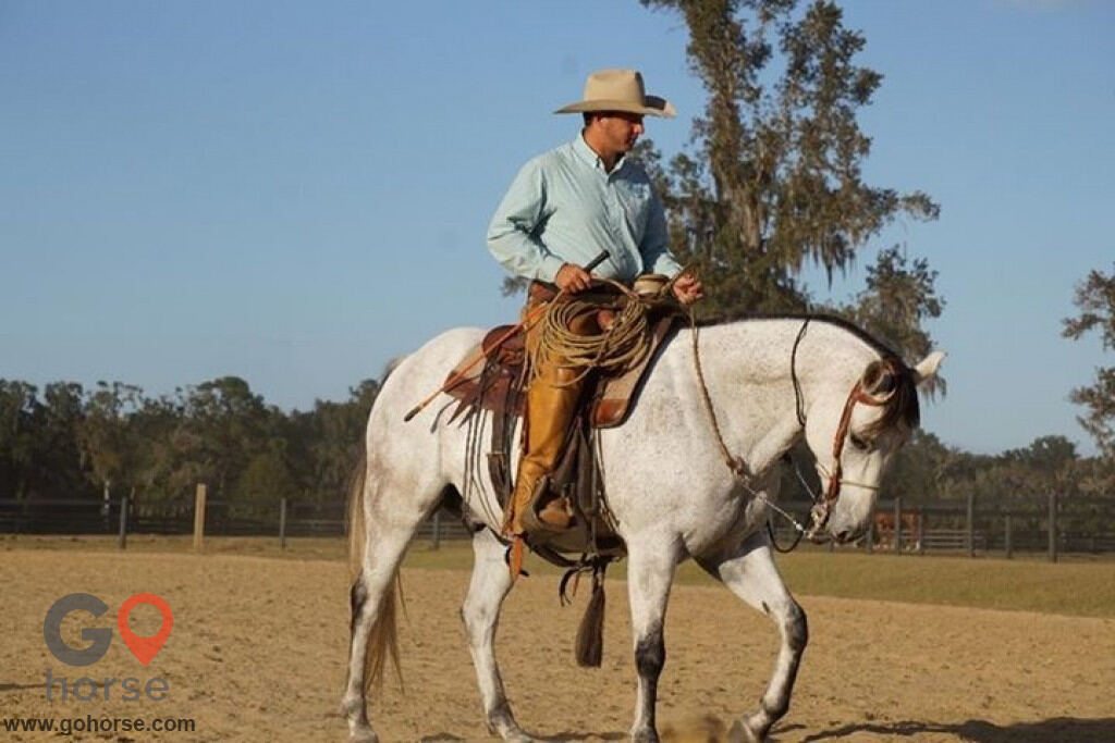 Pear Tree Ranch Horse stables in Citra FL 13
