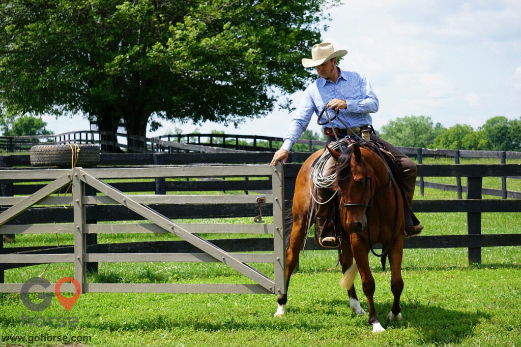 Pear Tree Ranch Horse stables in Citra FL 1