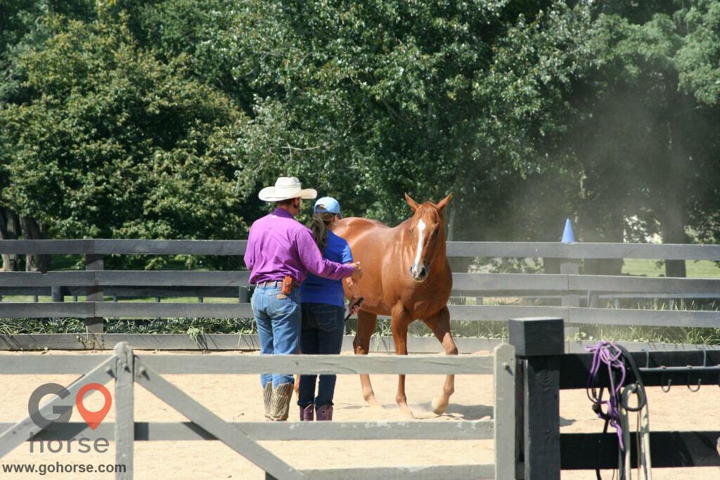 Pear Tree Ranch Horse stables in Citra FL 14