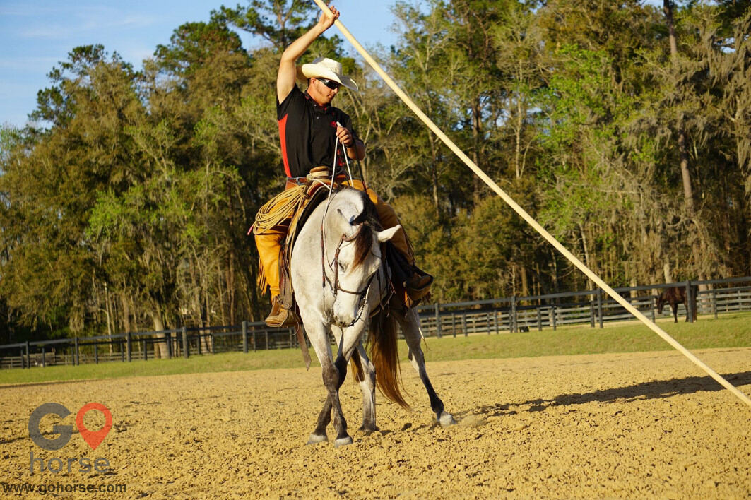Pear Tree Ranch Horse stables in Citra FL 9