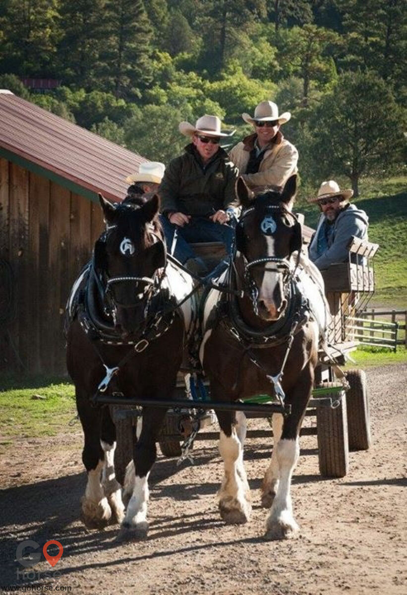 Pear Tree Ranch Horse stables in Citra FL 2