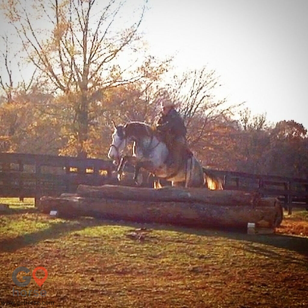Pear Tree Ranch Horse stables in Citra FL 16