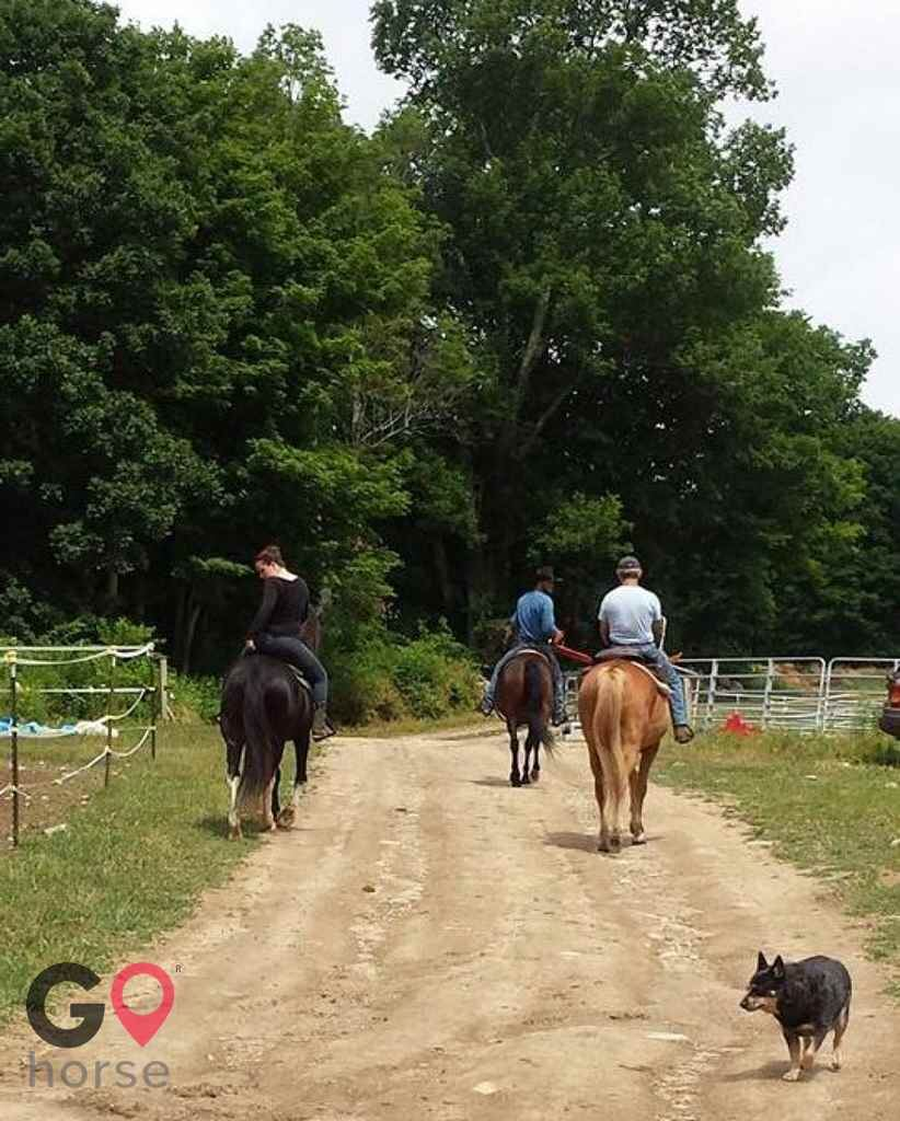 North Star Farm Horse stables in Norwell MA 4