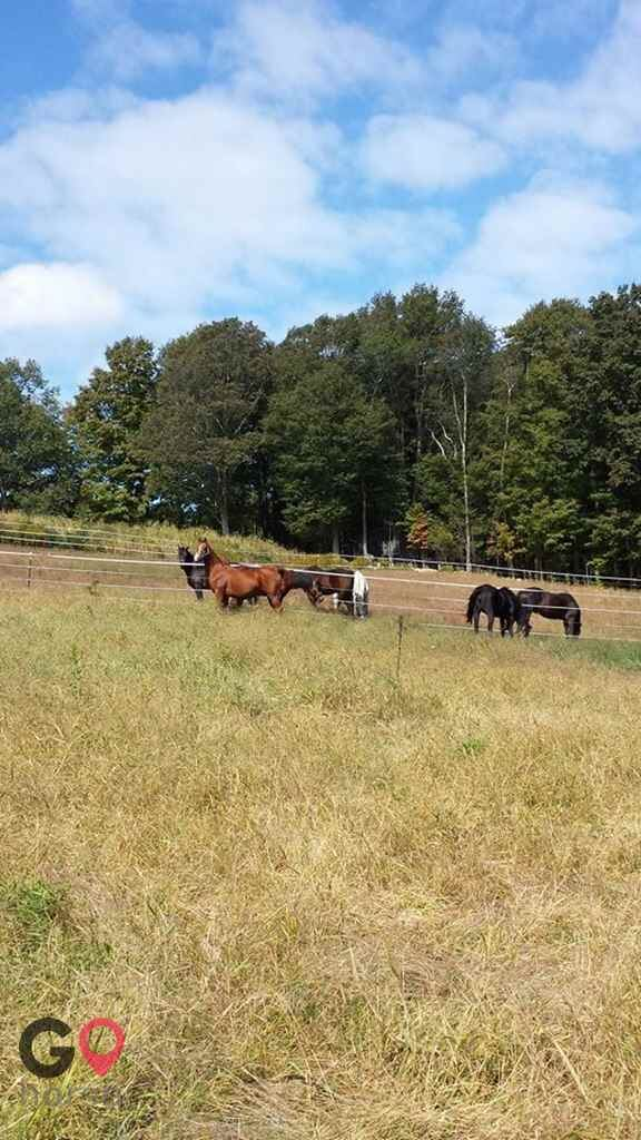 North Star Farm Horse stables in Norwell MA 3
