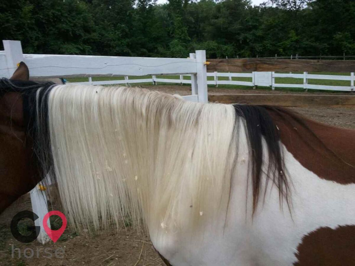 Wareabouts Farm LLC Horse stables in Danielson CT 2