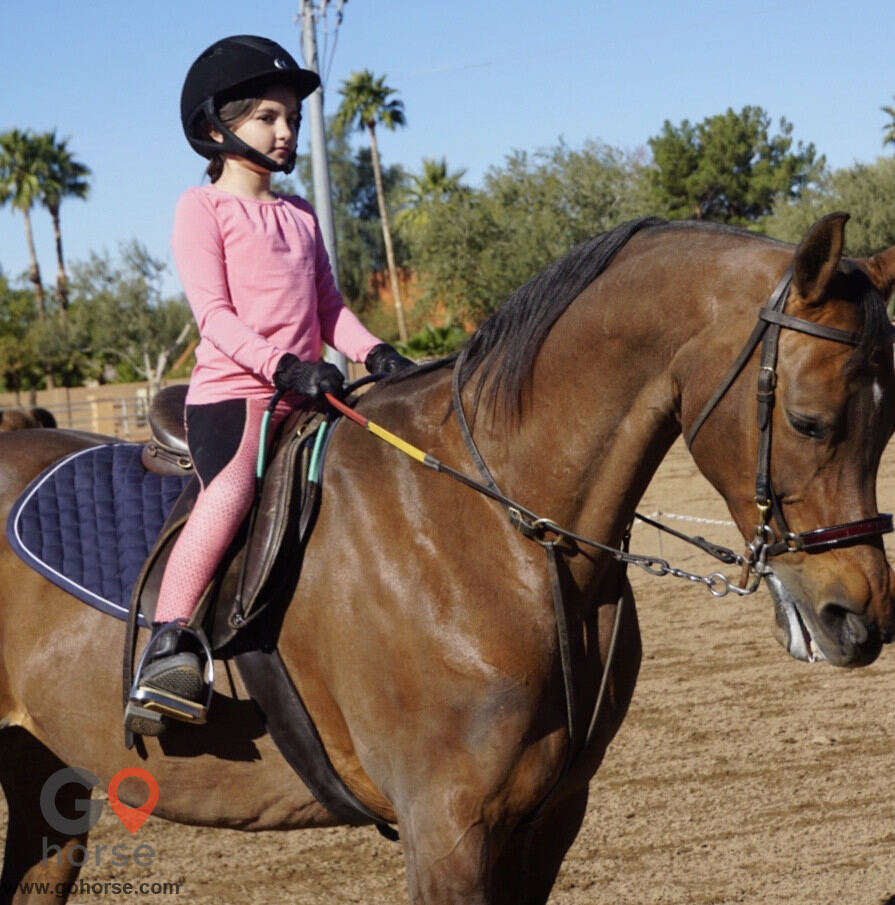 Apex Riding Academy Horse stables in Scottsdale AZ 2