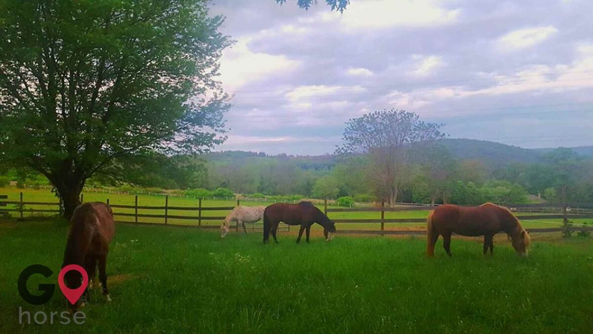 Mountain Pine Haven Horse stables in Myersville MD 1