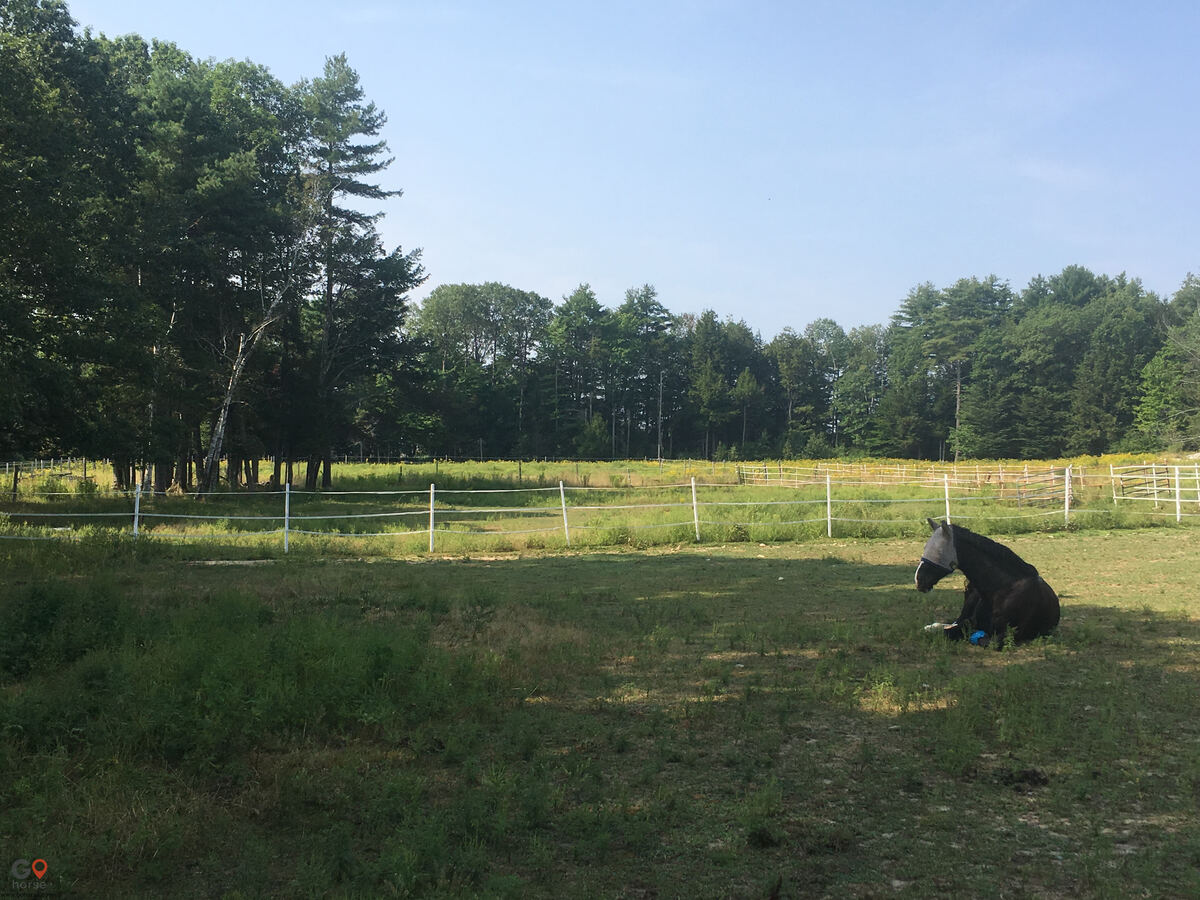 Hideaway Acres Horse stables in Cumberland ME 12