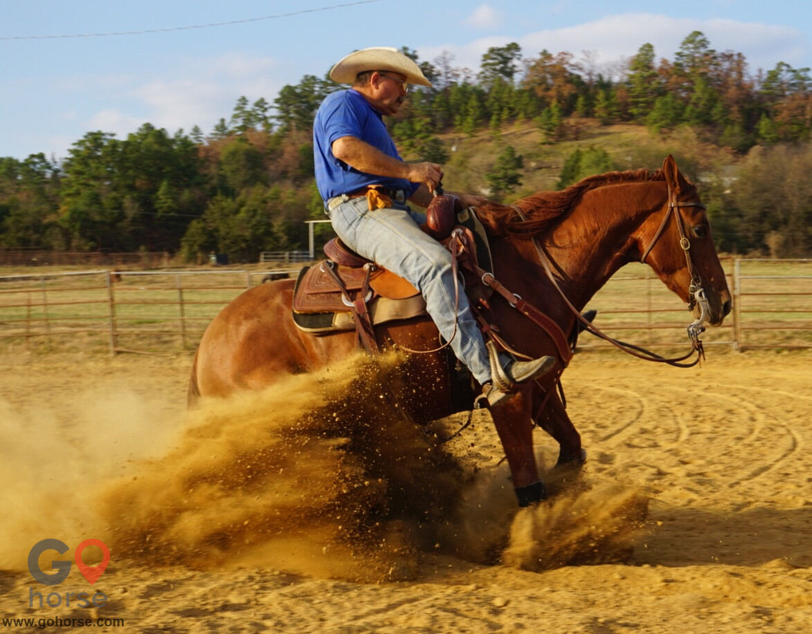 Tinker Turner Performance Horses Horse stables in Booneville AR 2