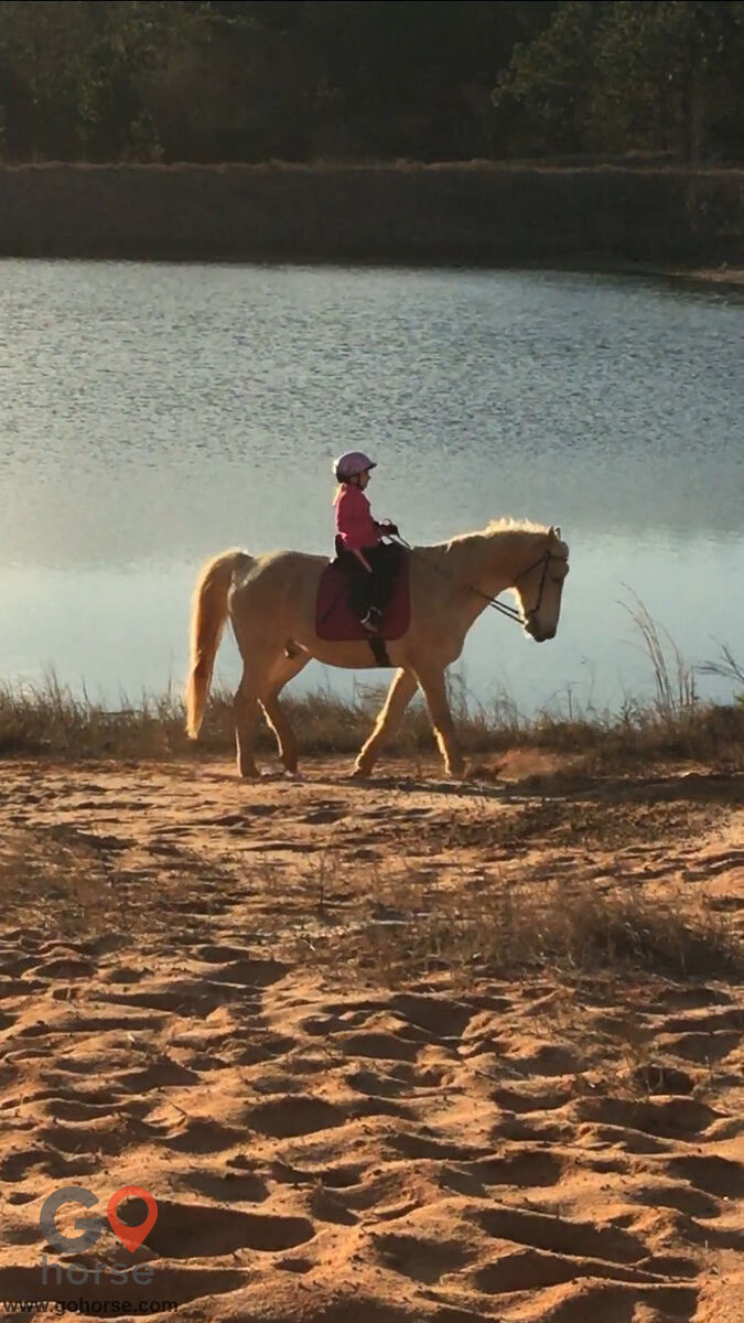 Amazing Gaits Equestrian Center Horse stables in Theodore AL 4