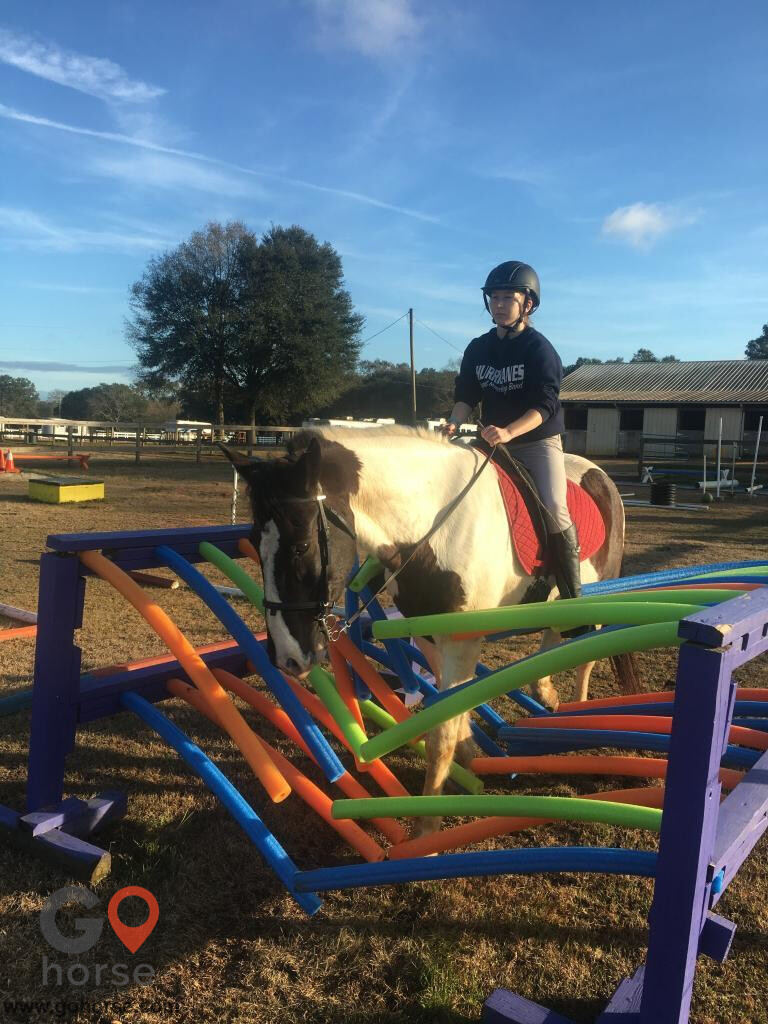Amazing Gaits Equestrian Center Horse stables in Theodore AL 5